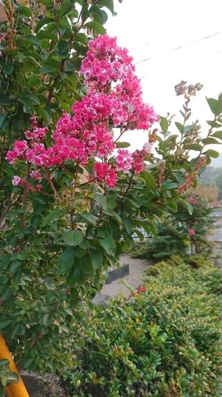 夏に咲くサムネイル