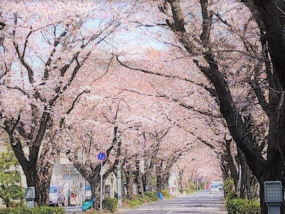 桜咲いたね。サムネイル