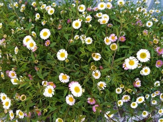 小さな花に・・。サムネイル